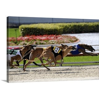 """""""Greyhound dogs racing at Fort Myers, Florida"""" Canvas Wall Art"""