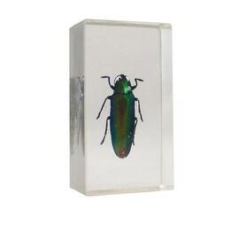 Real Bugs Kumbang Padang Jewel Beetle in Resin