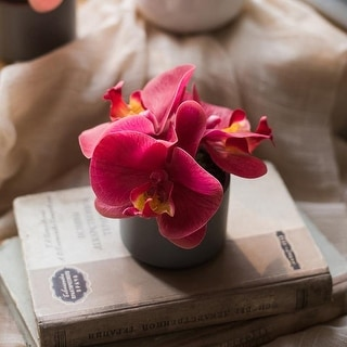 RusticReach Mini Real Touch Potted Orchid in Velvet Red