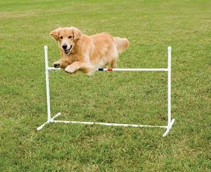 Dog leaping over a bar