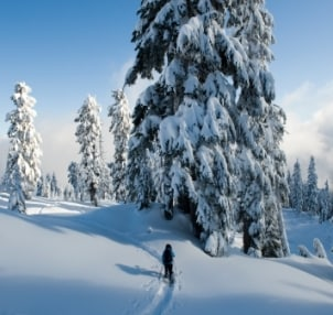 Snowshoer enjoying solitude in a winter landscape