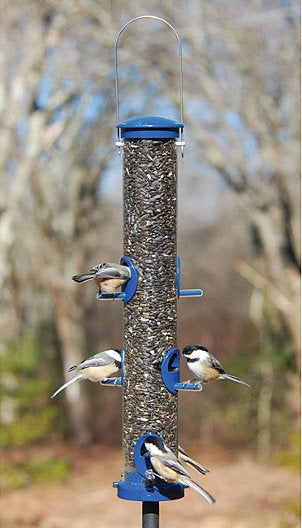 Best Places to Set Up Birdfeeders