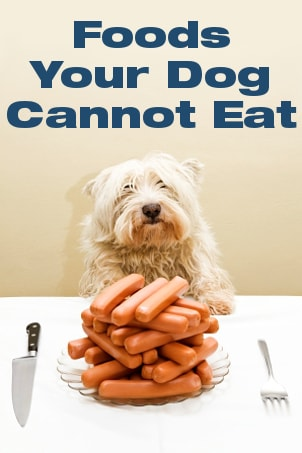 Foods Your Dog Cannot Eat