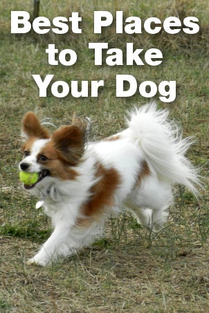 Best Places to Take Your Dog