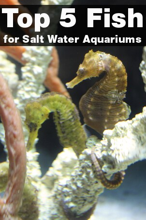 Top 5 Fish for Salt Water Aquariums