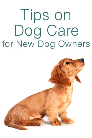 tips on dog care for new dog owners
