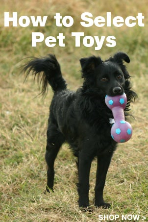 How to Select Pet Toys