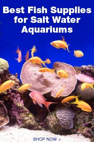 Best Fish Supplies for Salt Water Aquariums