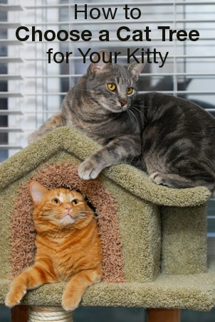 How to Choose a Cat Tree for Your Kitty