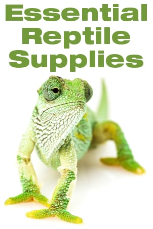 Essential Reptile Supplies