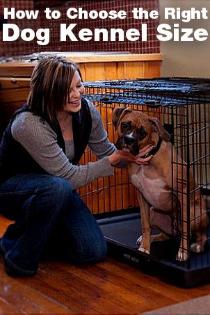 How to Choose the Right Dog Kennel Size