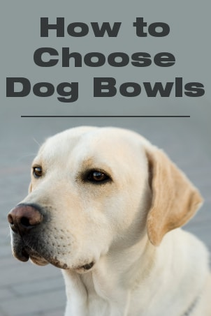 How to Choose Dog Bowls