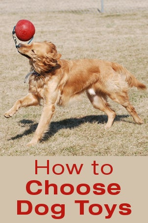 How to Choose Dog Toys