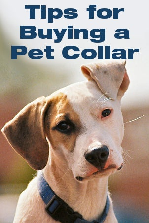 Tips for Buying a Pet Collar