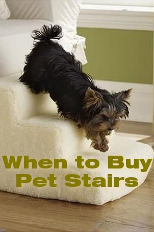 When to Buy Pet Stairs