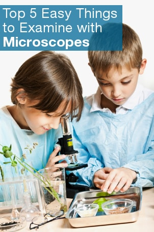 Top 5 Easy Things to Examine with Microscopes