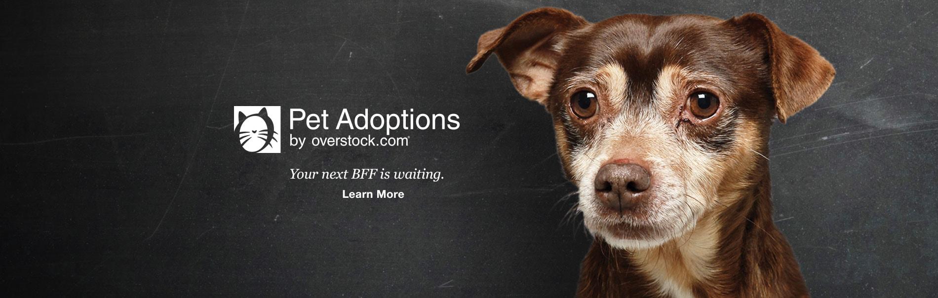 Overstock Pets