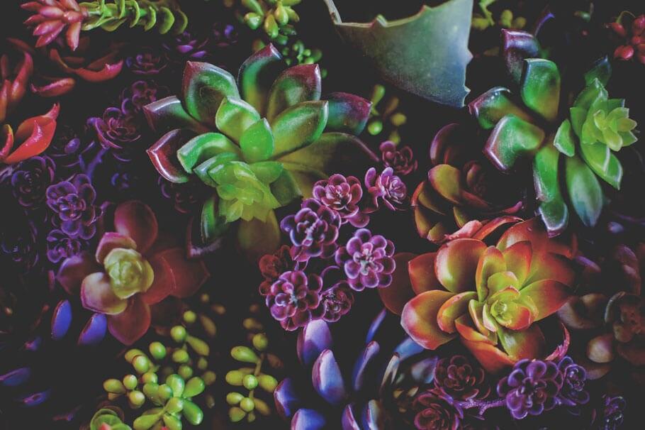 Assortment of succulents