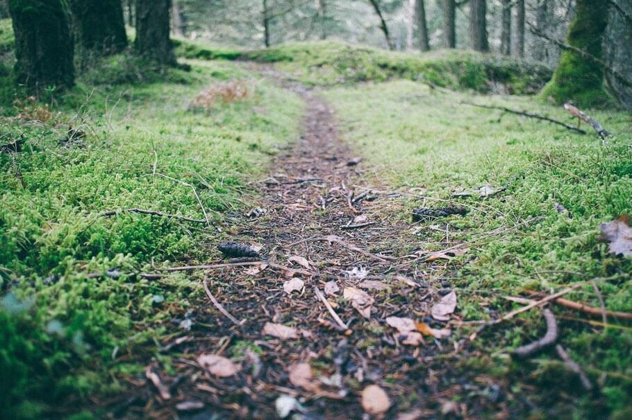 Pathway through forest