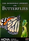 The Incredible Journey Of The Butterflies (DVD)