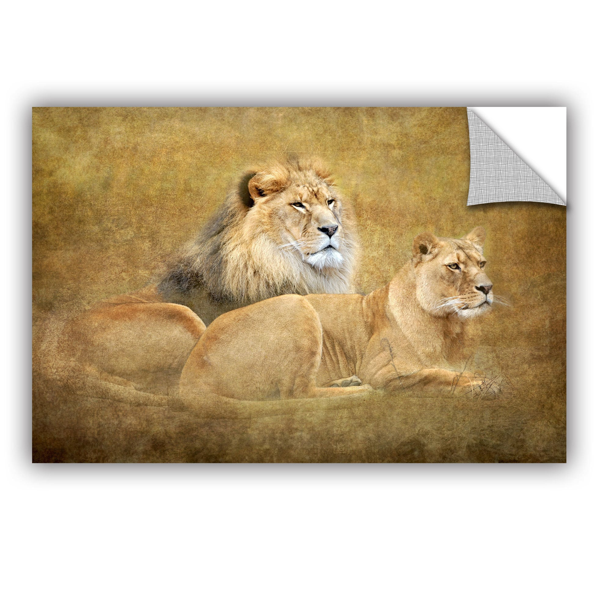 Shop Antonio Raggio \'Lions\' Art Appealz Removable Wall Art - On Sale ...