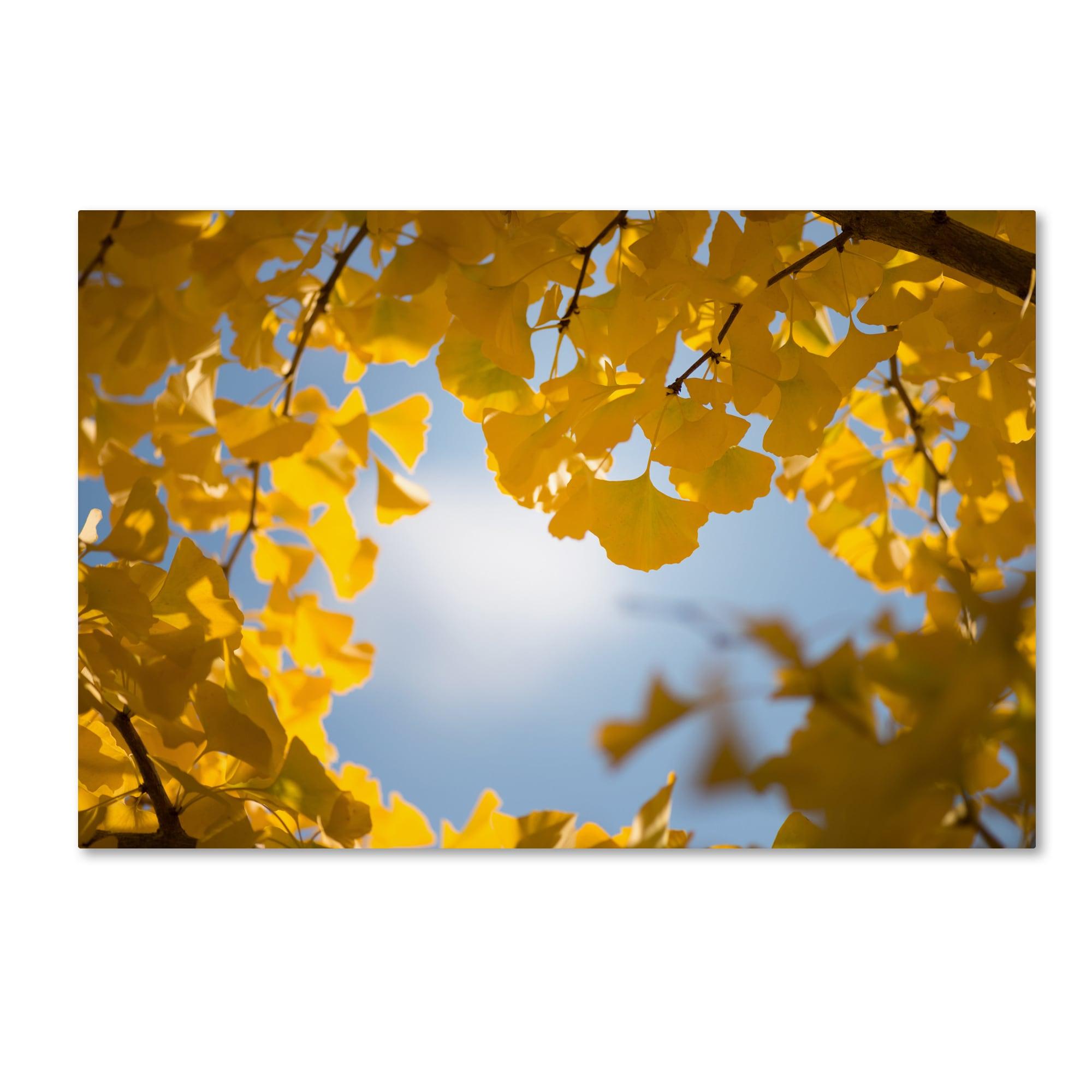 Philippe Sainte-Laudy \'Ginkgo Leaves in Autumn\' Canvas Art - Multi ...