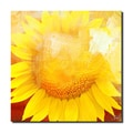 Ready2HangArt 'Painted Petals XCVIII' Canvas Art