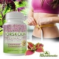 Forskolin 250mg Pure Coleus Forskohlii Root for Weight Loss (2 Packs of 60 Softgels)