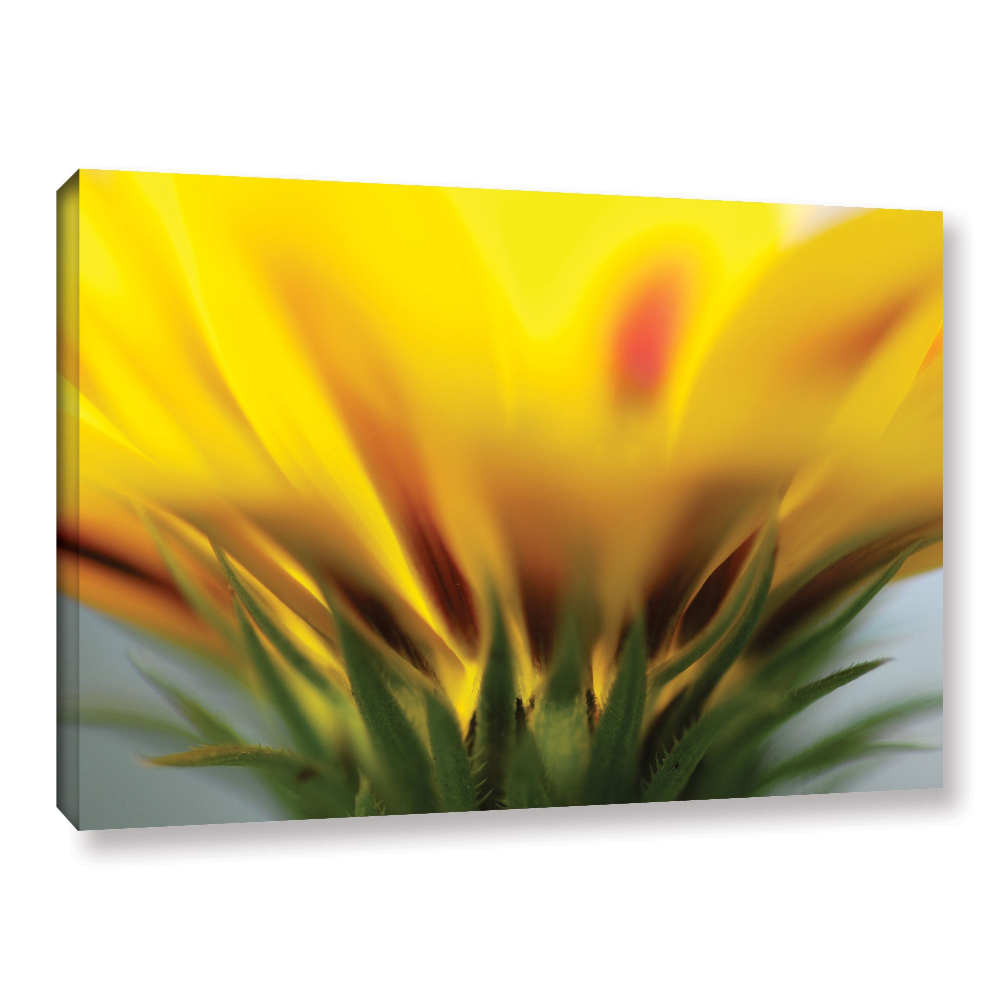 Shop ArtWall Sydney Schardt\'s Mexican Daisy, Gallery Wrapped Canvas ...
