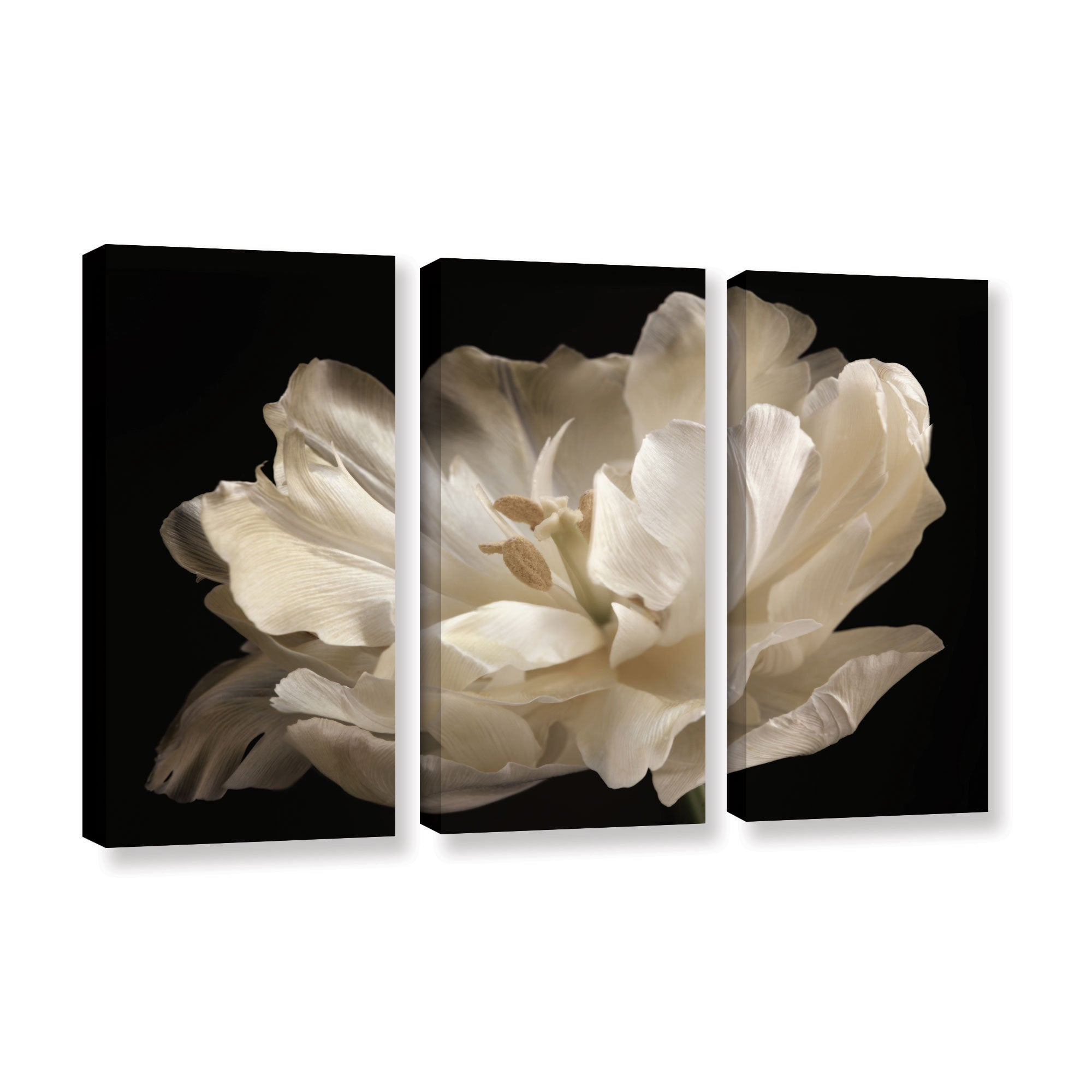 Shop Artwall Cora Nieles White Tulip 3 Piece Gallery Wrapped Canvas