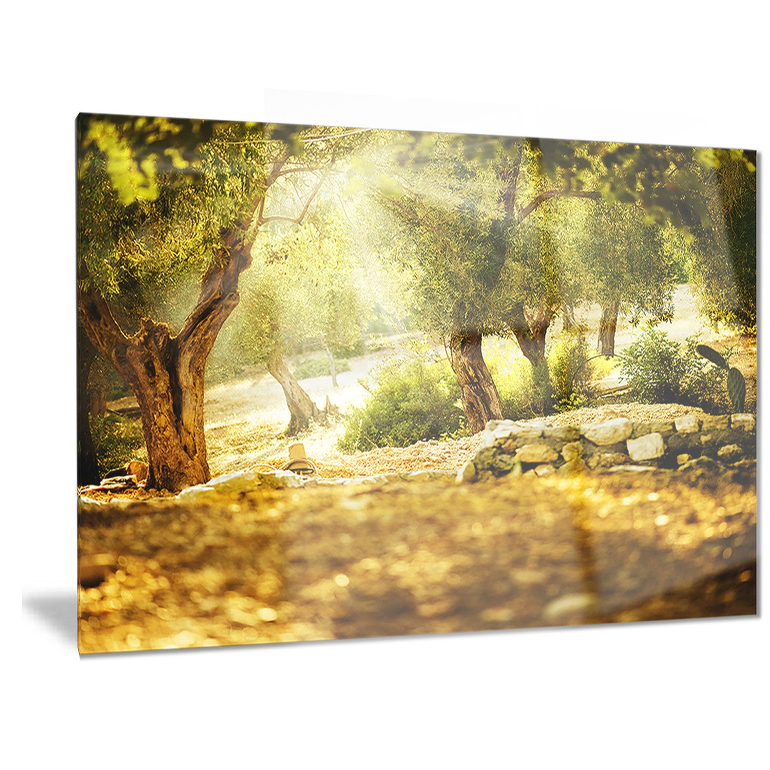 Shop Designart \'Olive Trees\' Photography Metal Wall Art - On Sale ...