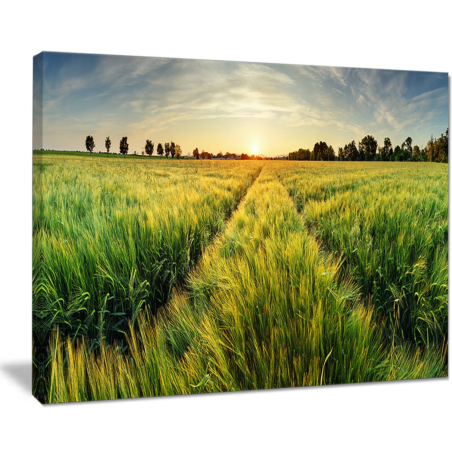 Green Wheat Field at Sunset - Landscape Large wall art canvas - Free ...