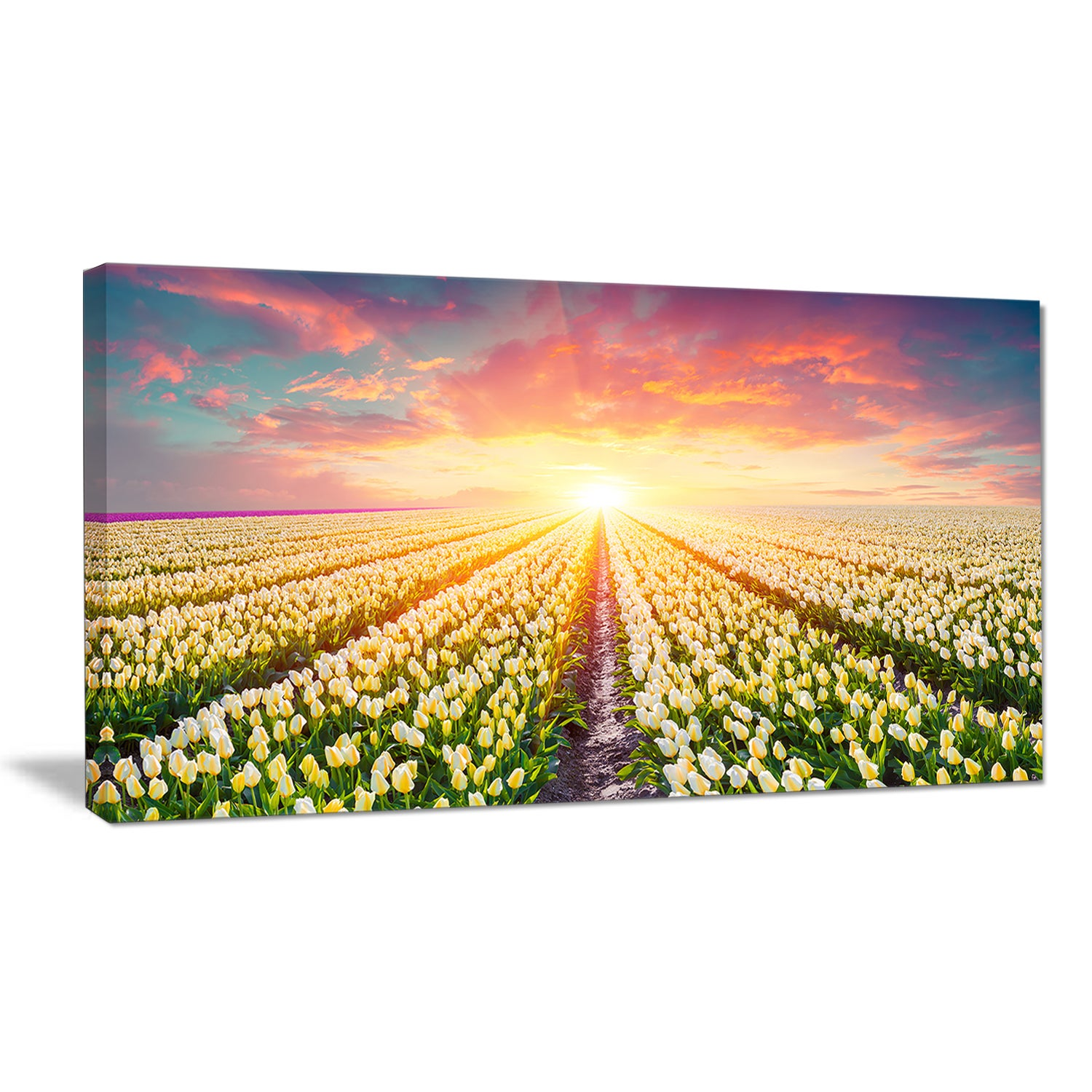 Shop Blooming White Tulips - Landscape Large Wall Art - Green - On ...