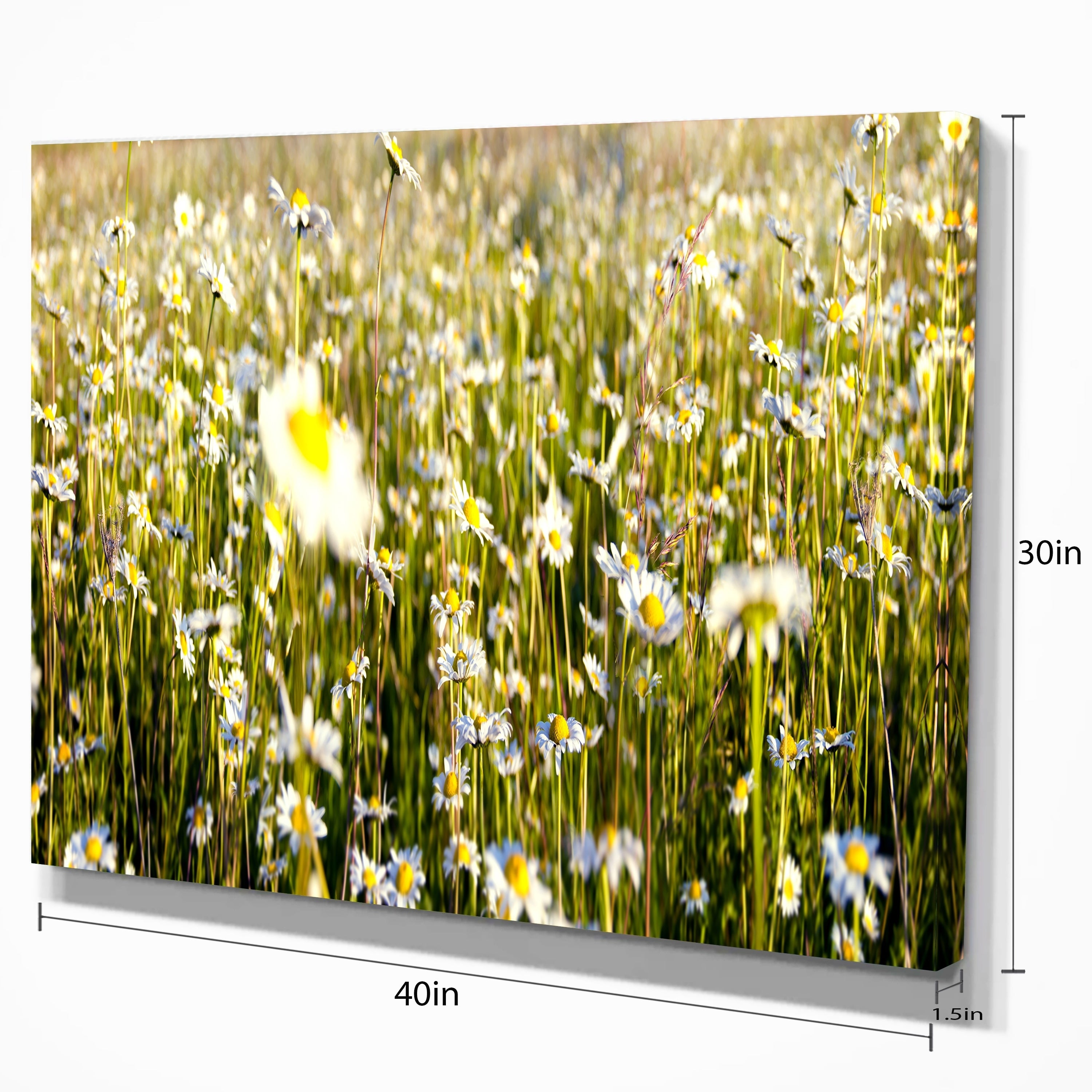 Shop Wild Chamomile Flowers Field - Large Flower Canvas Wall Art ...