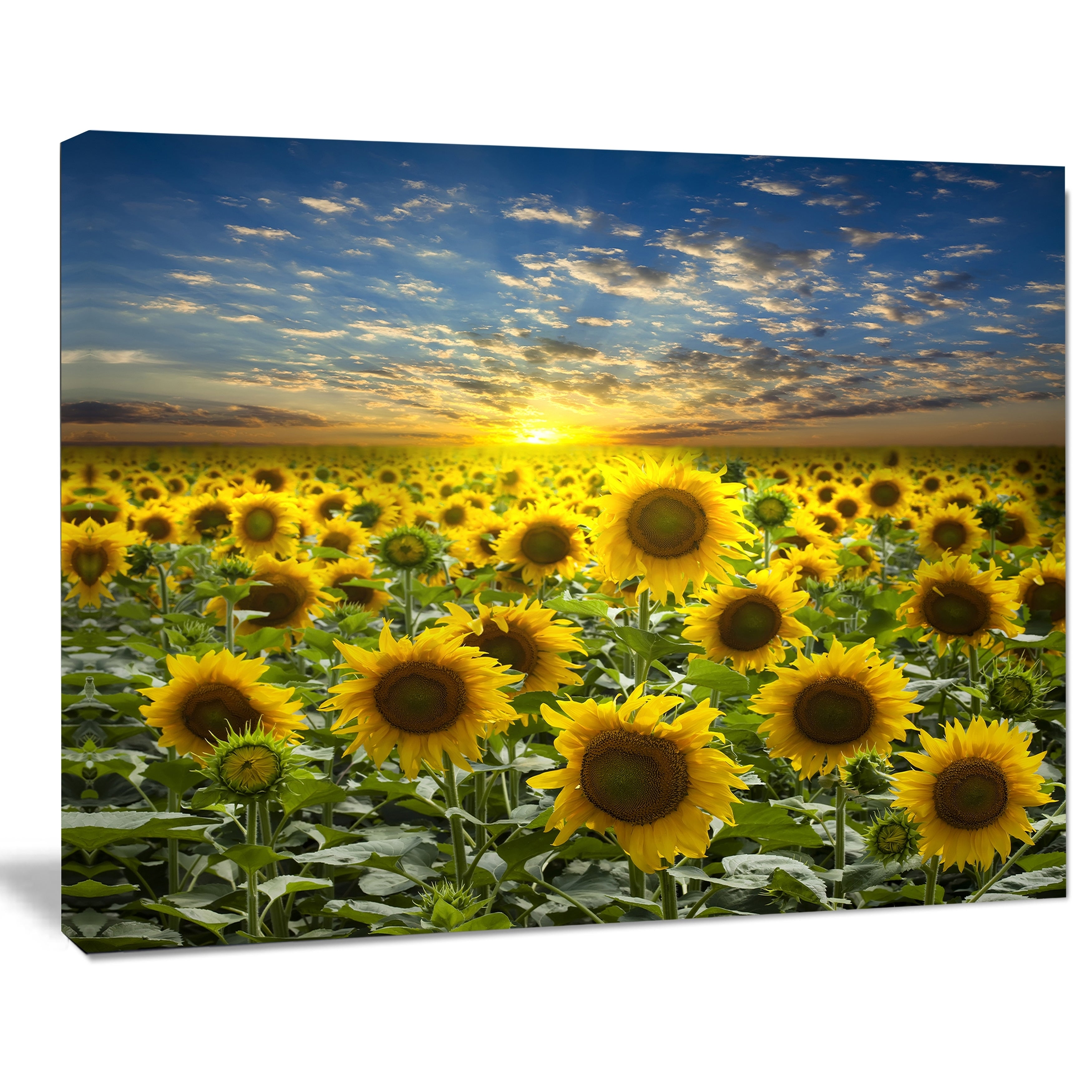 Field of Blooming Sunflowers - Large Flower Canvas Wall Art - Green