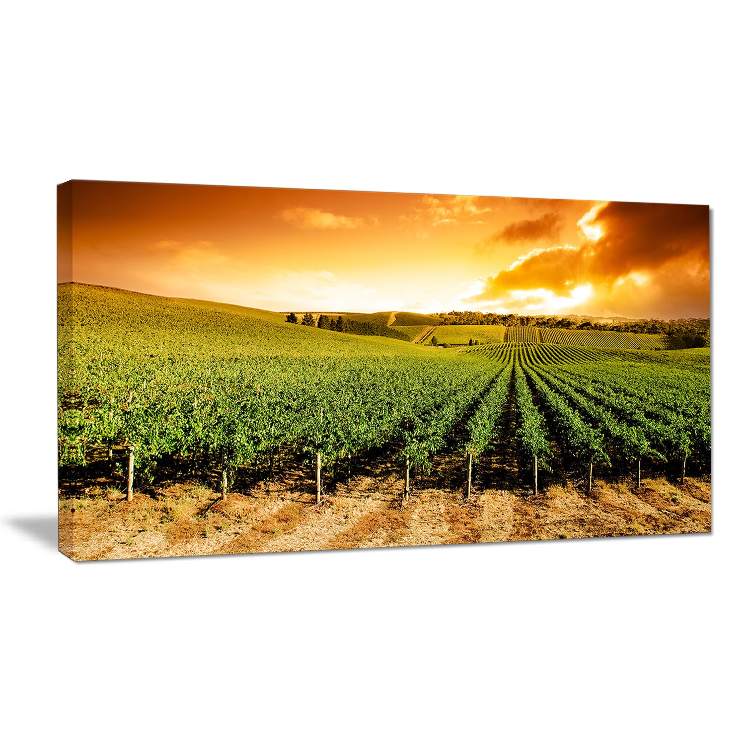 Shop Sunset Vineyard Panorama - Extra Large Wall Art Landscape ...