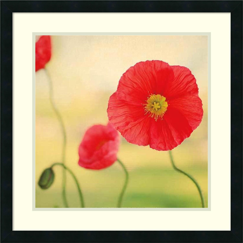 Shop Framed Art Print \'S\'il Vous Plait Poppies\' by Alicia Bock 25 x ...