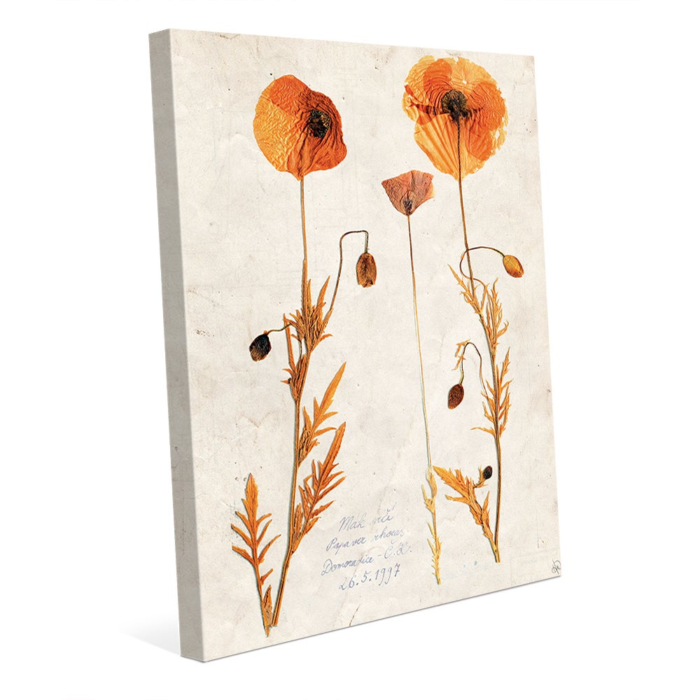 Dry Poppy Canvas Wall Art Free Shipping Today Overstock 19495075