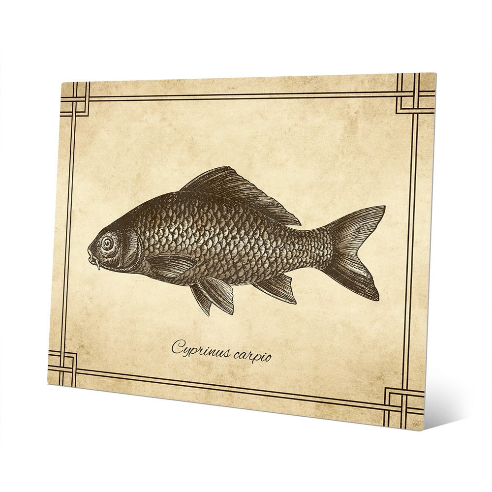 Vintage Carp Zoology\' Wall Art on Metal - Free Shipping Today ...