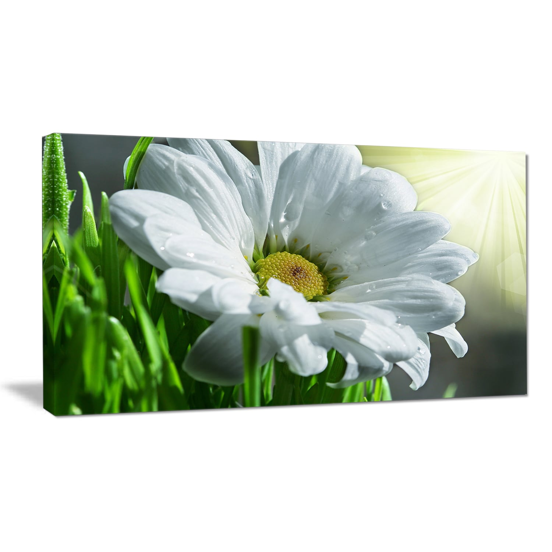 Designart single beautiful daisy flower large flower wall artwork designart single beautiful daisy flower large flower wall artwork white free shipping on orders over 45 overstock 19863921 izmirmasajfo