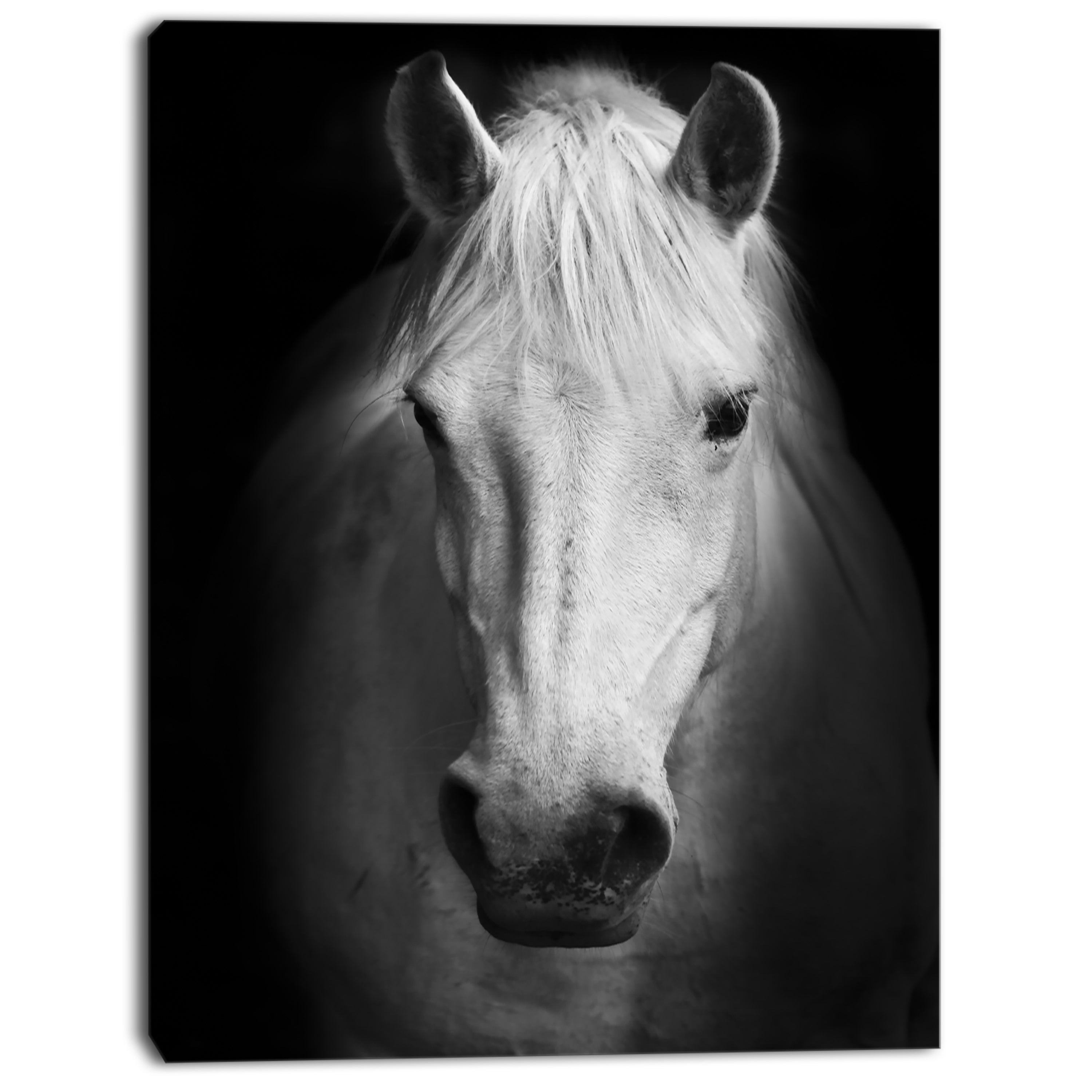 Shop designart white horse black and white extra large animal artwork white on sale free shipping on orders over 45 overstock com 13135640