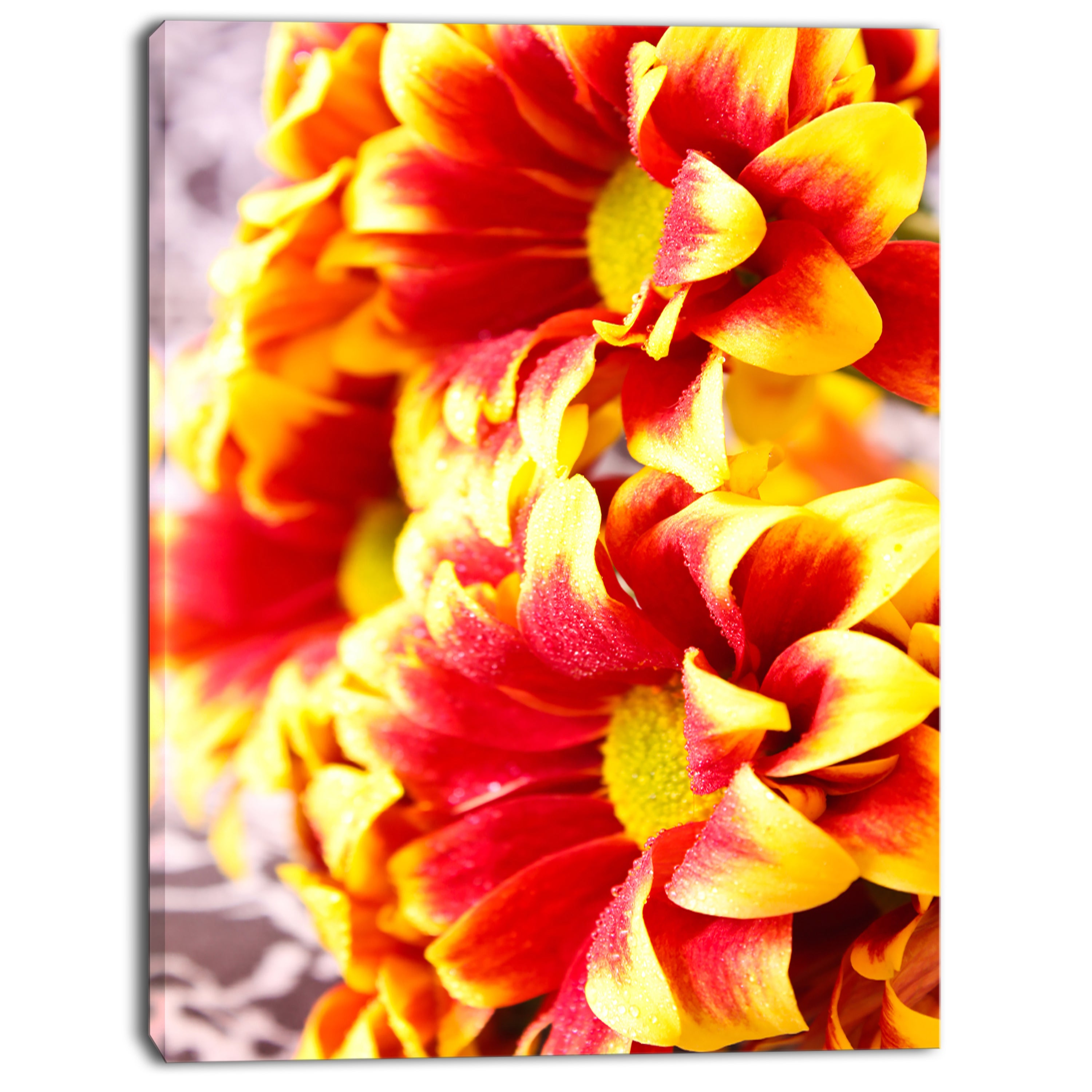 Shop Designart Red Yellow Flower Background Photo Large Floral