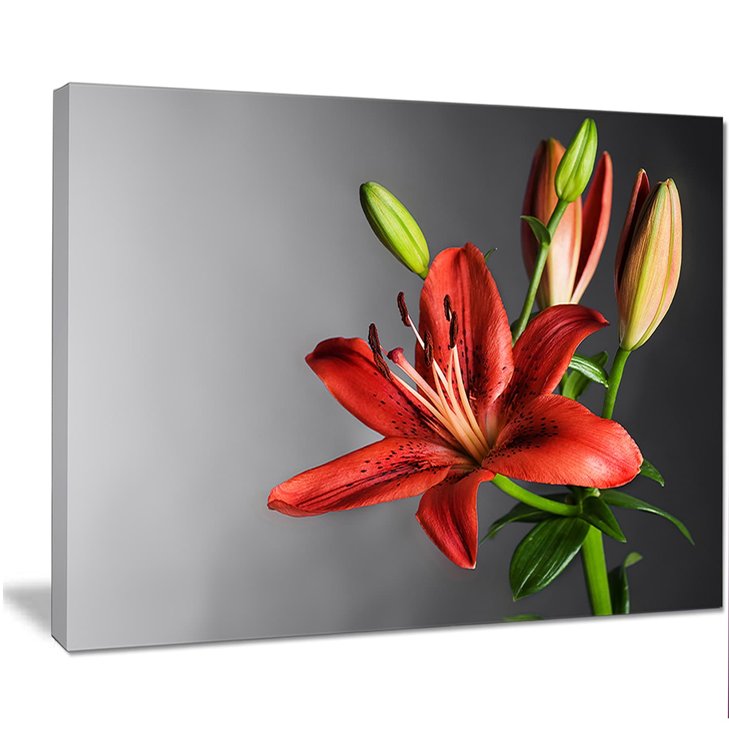 Shop Designart Cute Red Lily Flower Over Black Flowers Canvas Wall