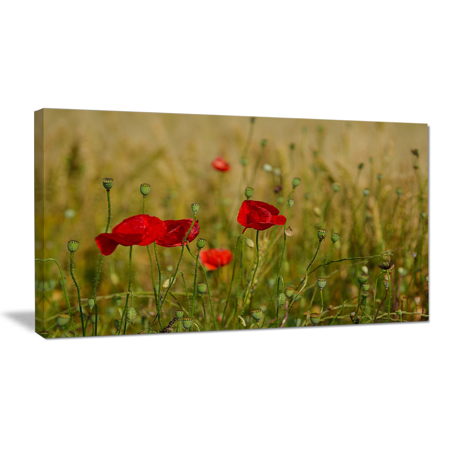 Shop Designart \'Red Poppy Flower Field Background\' Large Flower ...