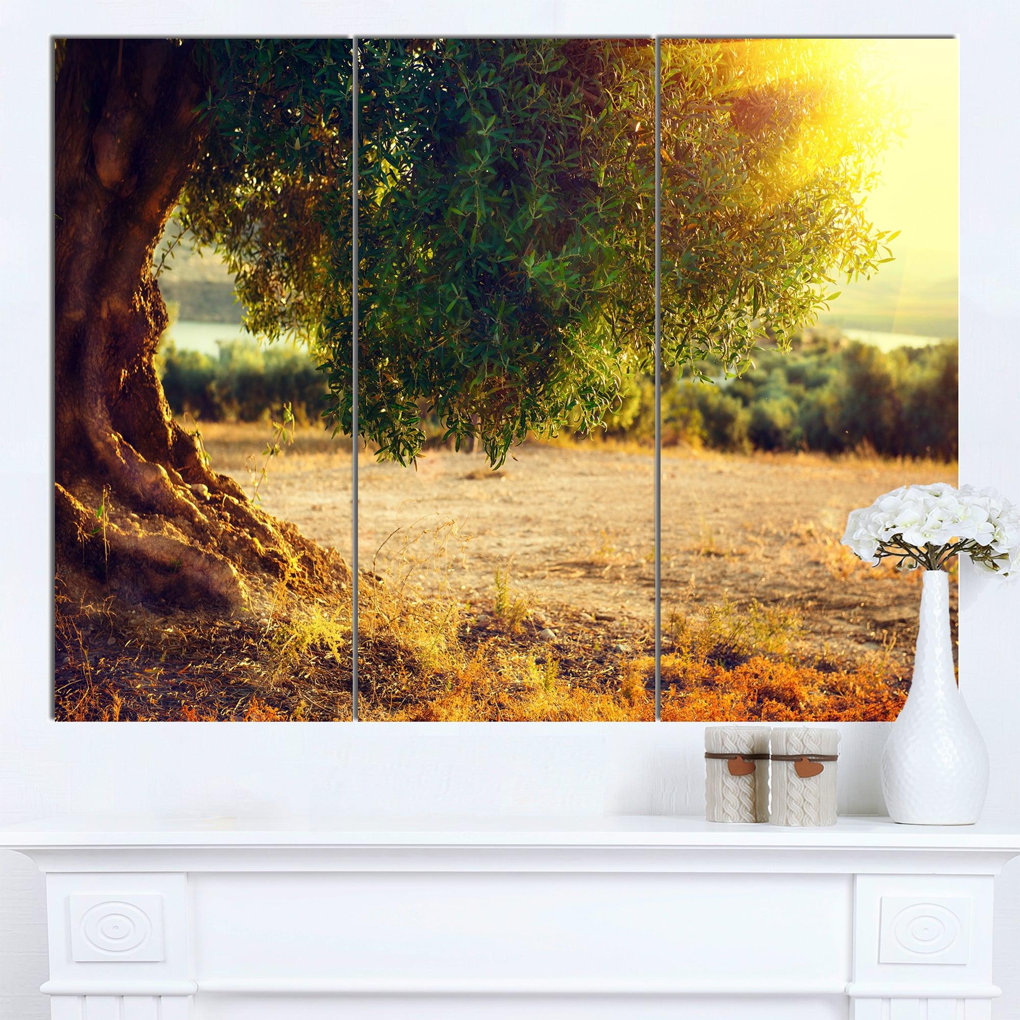 Shop Designart \'Stunning Olive Trees at Sunset\' Large Landscape Art ...