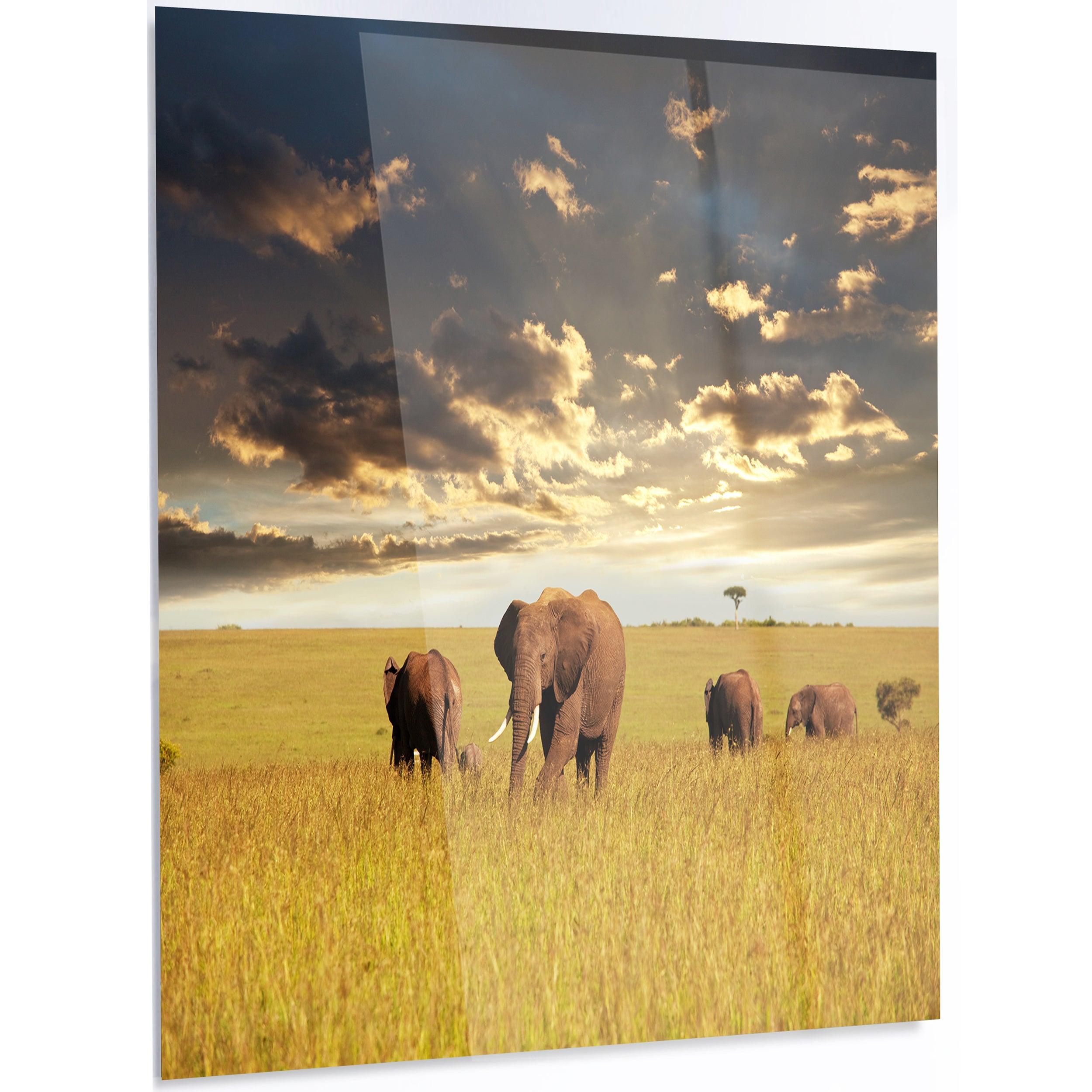 Designart \'Group of Elephants in Africa\' African Metal Wall Art ...