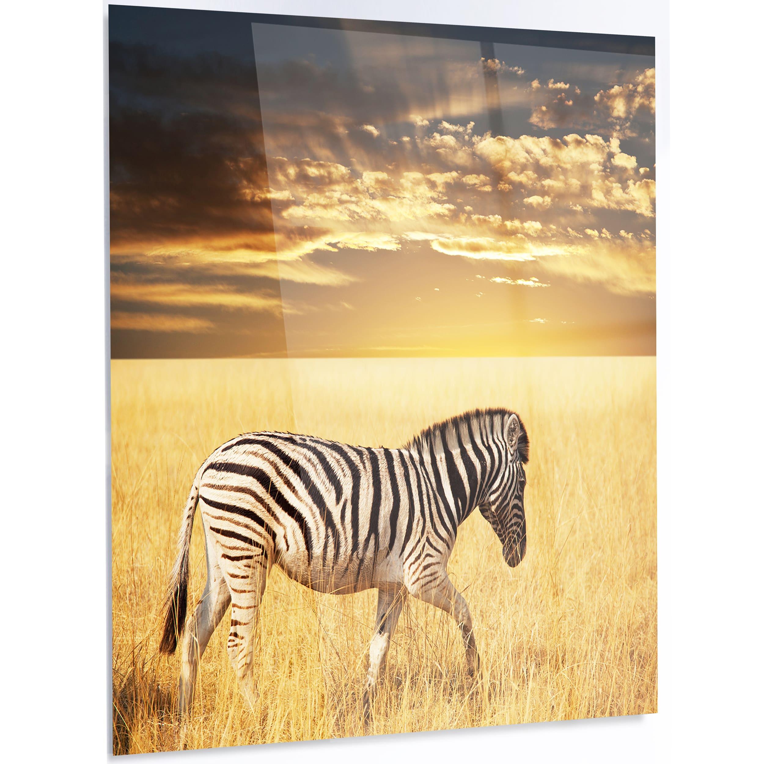 Designart \'Solitary Zebra Walking in Grassland\' African Animal Metal Wall Art