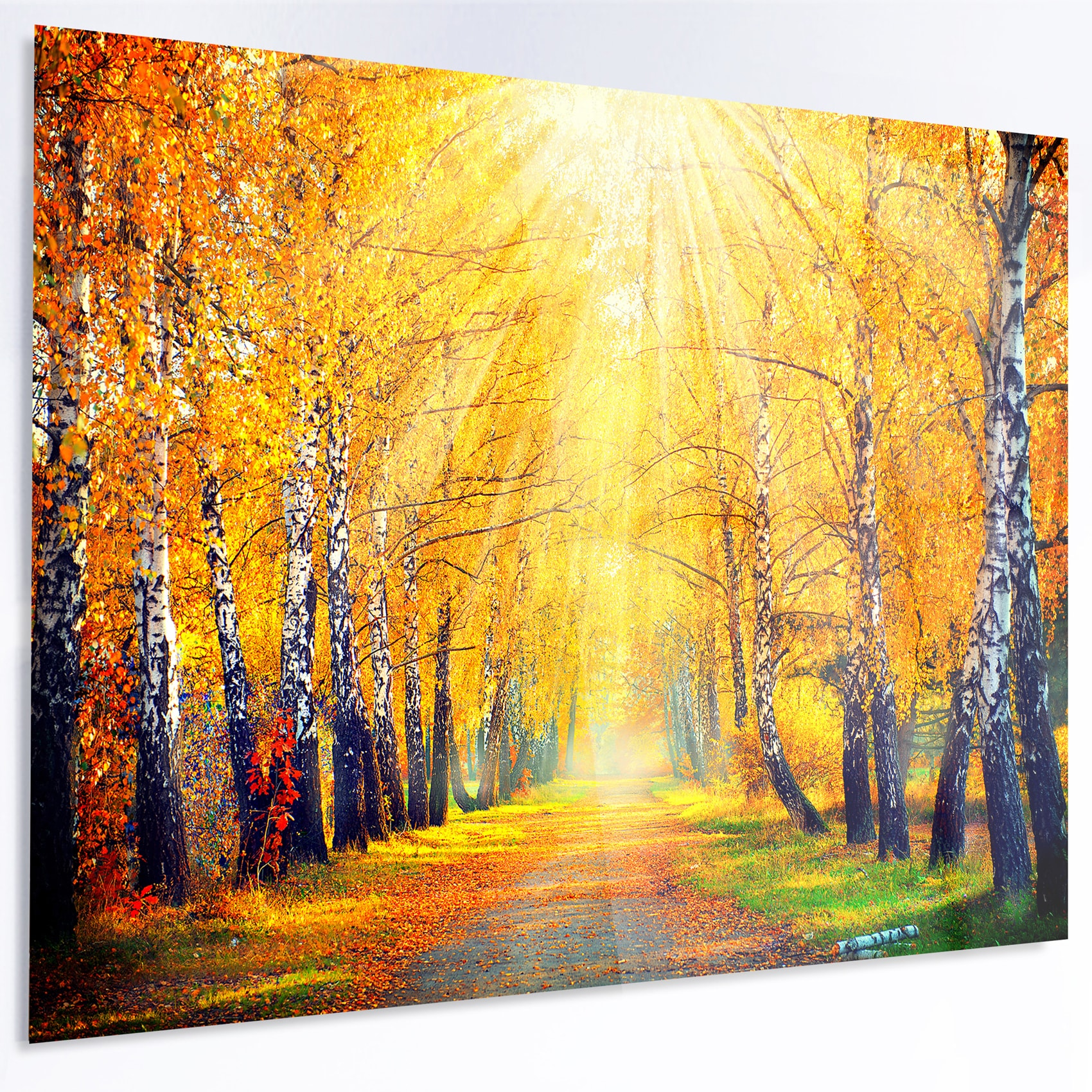Designart \'Yellow Autumn Trees in Sunray\' Large Landscape Art Metal ...