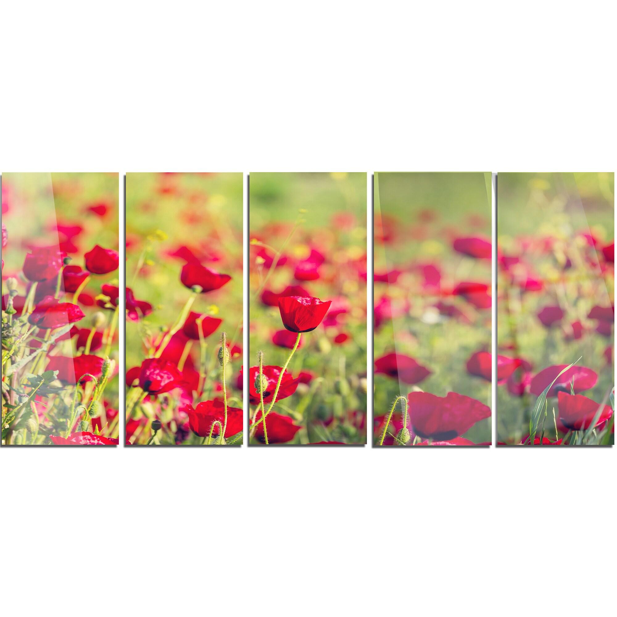 Shop Designart Beautiful Poppy Flowers Background Large Flower