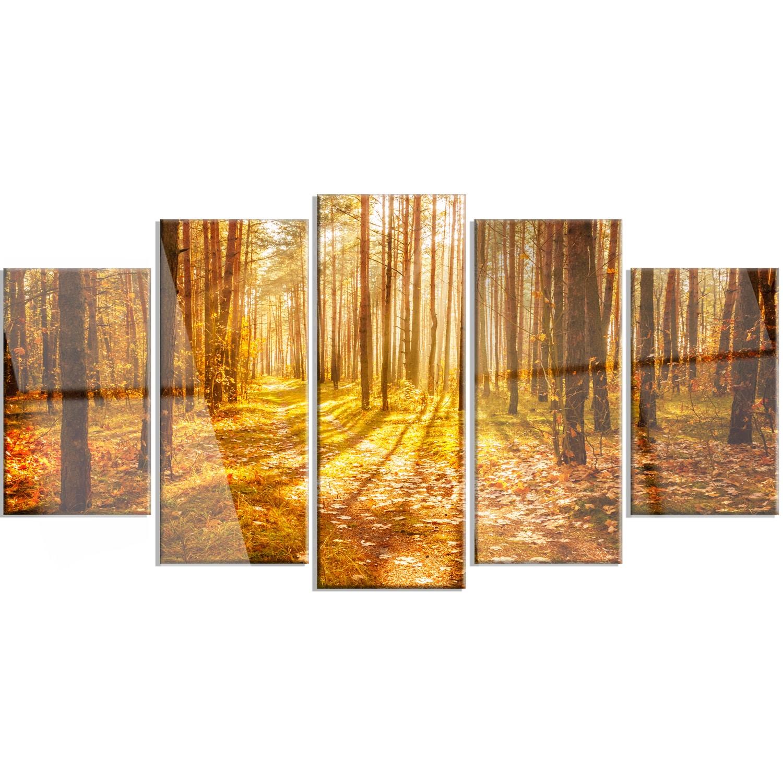 Designart \'Bright Sunlight in Yellow Fall Forest\' Modern Forest ...